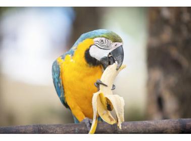 Bien nourrir un perroquet